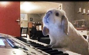 Spela piano är bara en av många saker som exempel kan.