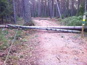 I Karlslundsskogens motionsspår har två stycken elljusstolpar fällts till marken. Förmodligen är det fallande träd som, i sin tur, fällt elljusstolparna.