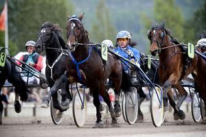Hästar i alla tänkbara aspekter blir det för ungdomarna som kommer till Dannero.