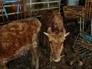 Många av djuren var i akut behov av vård.