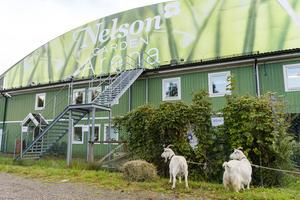 Nelson Garden Arena. Foto: Bildbyrån.