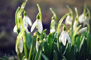 Våren har kommit, förhoppningsvis för att stanna.