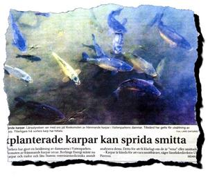 Foto:Johan Larsson