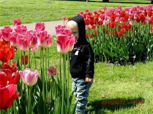 Tulpanerna är lika höga som Alexander 2 år.