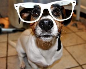 Ser jag bra ut? ser hunden Lollipop ut att säga.