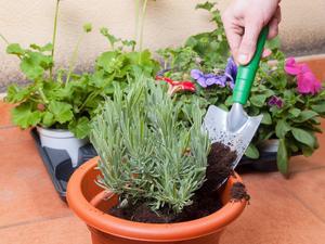 Foto: Shutterstock   Bildtext: Olika jord till olika plantor behövs sällan. Ibland är det bara texten på förpackningen som skiljer en jordsort från en annan.
