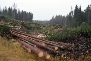 Efter att Trfaikverket löst in mark har skogen avverkats för att ge plats för den nya vägen.