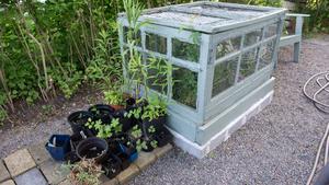 Trädgårdsodling. Kolonisterna på området har tillgång till sjövatten för att vattna i sina trädgårdar.