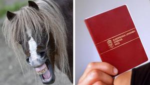 Från 1 januari behöver alla hästar i EU-området ett pass.