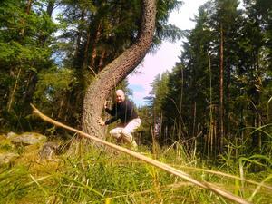Den lilla söta igelkotten kunde inte komma fram för det stod ett stort träd i vägen. Så för att hjälpa till så jag flyttade undan trädet lite…