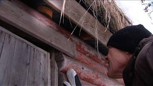 För några dagar sedan upptäckte norske Inge Haugen att en surströmmingsburk suttit fastkilad under taket.