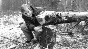 Dyr gran. Björn Olsson, Energiverket, visar vad som orsakade strömavbrott för flera.
