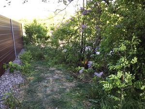 Här hittades den avlidna kvinnans kropp efter flera dagars letande - 160 meter från Lena Wesströms hem.