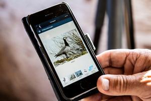 I dag finns det  bra appar till mobiltelefonerna som både visar hur fåglarna ser  ut och hur de låter.