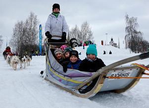 Lilly Murray-Eriksson, Julia Nordqvist, Jonathan Svensson, Alfred Strand och Nikki Mattsson njöt av turen med hundspann.Foto: Niklas Andersson