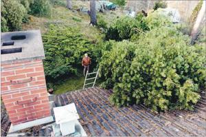 Rune Breidner i Tranås vaknade av ett brak under stormnatten. En villatomtens stora tallar föll över hustaket.