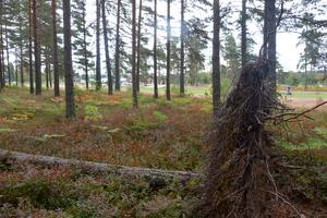 En blixt slog ner i ett träd på golfbanan i Traås natten till torsdagen.