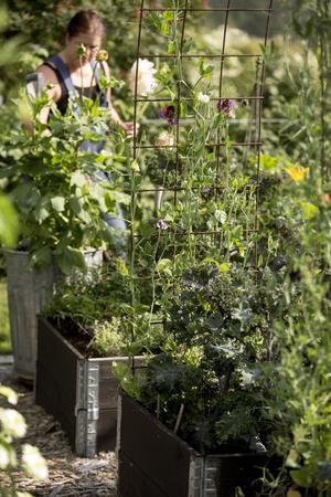 Att ta ett varv i köksträdgården och se hur mycket allting växer ger Karin glädje.