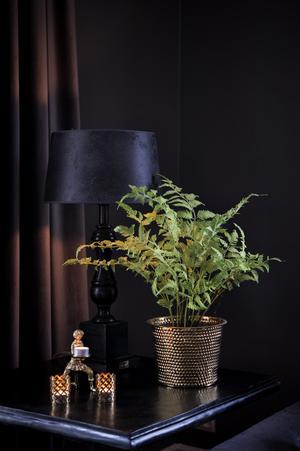 Den spirande ljusa växten sticker ut från de mörka tonerna i vardagsrummet.