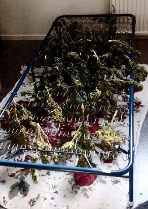 I lägenheten hittades drygt ett kilo cannabis. Fotot är från polisens förundersökningsprotokoll.