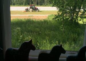 Traktorn därute går på GPS och behöver ingen förare... men dalahästarna går med för säkerhets skull! Foto: Göran Greider.