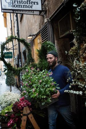 Christoffer bär ut över 60 lådor blommor och växter och arrangerar vackert i gränden varje morgon. Här är ett helt flak med julrosor på väg ut.