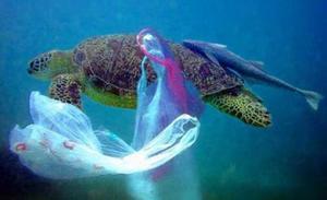 Plastpåsen hamnar ofta i världshaven med fatala effekter. Arkivbild