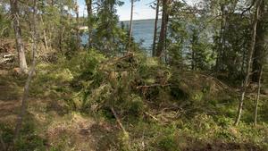 Stina Moberg skriver att Skogsstyrelsen inte fattar några beslut i nyckelbiotopsfrågor. Detta stämmer inte, för jag känner till fall, skriver debattförfattaren.