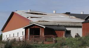 Stora delar av djurstallets tak slets av i vinden. I stallet finns det grisar.
