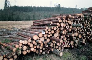 Idag rullar i genomsnitt två timmertåg om dagen mot Sundsvall. När Petersvik jämnats med marken beräknas antalet tredubblas. Vilka skogar ska upphöra att finnas till för att det här ska gå ihop? undrar debattförfattarna.