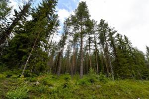 En skog i Älvdalen. Privat och fri egendom – tills staten bestämmer sig för att lägga en död hand över den, utan att betala för sig.
