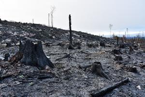 Är brandturisterna på väg till Äxingmyrkullen i Bräcke kommun?