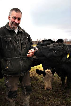 """ställer krav. """"Jag kan stängsla in mina nötdjur men det är svårt att stängsla ut rovdjuren. Nu måste man utreda hur vargetableringarna påverkar möjligheten att hålla djur och driva lantbruk"""", säger Per-Olof Uhrus, från Mo, som är djurhållare och LRF Gävleborgs viltansvarige."""