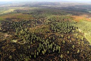 Bild över den branddrabbade området på Älvdalens skjutfält.