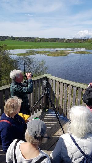 Ornitologen Janne Olsson skådar fågellivet. Foto: Lars Tjärnhammar