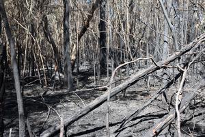 Gustav Sjöholm har rapporterat om hur boende i ett villaområde i en Sydneyförort fick bränderna nästan inpå knuten. Foto: Gustav Sjöholm/ TT.