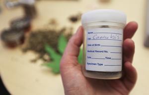 Cannabis som beslagtagits av polisen.