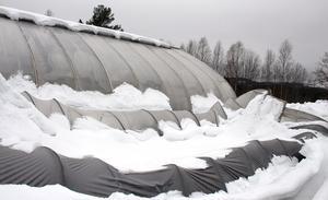 Gurkhuset föll samman  och Uno tror att det var en kombination av snöröjning och mycket snö som gjorde att det mindre växthuset föll ihop.