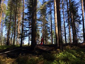 Utanför Oxberg utbröt en skogsbrand i torsdags.