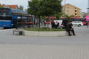 Gräsanden har valt att bosätta sig mitt på Norrtälje busstation.