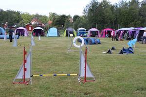 Så här kan en agilitybana se ut under tävling.