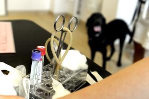 Ett riktigt hundgöra. För att få studera till veterinär måste man ha toppbetyg.