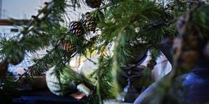 Lärkträd är vackra, tycker Lena.