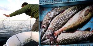 fiske & fiskar