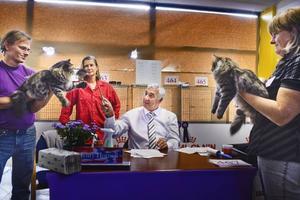 Bedömdes. 260 katter betygsattes av Henry Hornell och andra kritiska domare vid söndagens internationella utställning på Gävletravet.