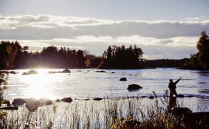 Vacker natur i Färnebofjärden. Foto:  Tomas Arlemo