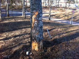 Bilen kraschade in i ett träd bredvid Gävlevägen.