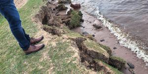 Gräsmattan vid stranden ett stycke från bryggan rasar ner i stora sjok.