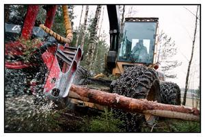 Skyddad skog ger ingen förnybar råvara, medan ansvarsfullt och långsiktigt brukade skogar ger ett viktigt och betydande bidrag i kampen mot klimatförändringar, skriver Björn Lyngfelt, SCA. Foto: Fredrik Persson/TT-Arkiv
