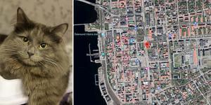 Arkivbild: Scanpix. Katten på bilden har ingen koppling till den aktuella händelsen.